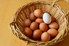 vita bruna ägg Arkivbild
