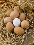 vita bruna ägg Royaltyfri Bild