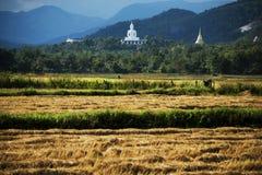 Vita buddha på kullen och de havested fältrisen Arkivfoton