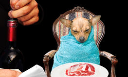 Vita canino del dolce Fotografía de archivo libre de regalías