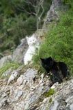 Vita Cat Black Cat Arkivbilder