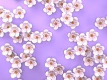 Vita Cherry Blossoms On Purple Background Royaltyfri Bild