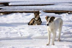 Vita da cani Fotografia Stock Libera da Diritti