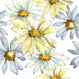 Vita Daisy Flower Blom- botanisk blomma Seamless bakgrund mönstrar Royaltyfri Foto