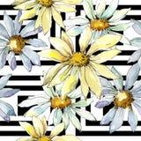 Vita Daisy Flower Blom- botanisk blomma Seamless bakgrund mönstrar Fotografering för Bildbyråer