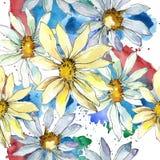 Vita Daisy Flower Blom- botanisk blomma Seamless bakgrund mönstrar Arkivbild