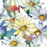 Vita Daisy Flower Blom- botanisk blomma Seamless bakgrund mönstrar Royaltyfria Bilder