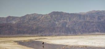 Vita del deserto Fotografia Stock