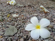 Vita del fiore Immagini Stock Libere da Diritti