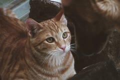 Vita del gatto fotografia stock libera da diritti