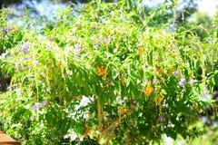 Vita del giardino di estate fotografia stock