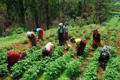 Vita del villaggio all'India di nordest Immagine Stock Libera da Diritti