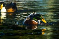 Vita dell'acqua fotografia stock libera da diritti