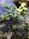 Vita dell'acqua immagini stock libere da diritti