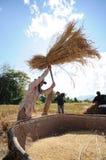 Vita dell'agricoltore in nordico della Tailandia Immagini Stock Libere da Diritti