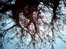 Vita dell'albero immagine stock