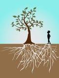 Vita dell'albero