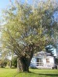 Vita dell'albero Fotografia Stock