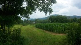Vita dell'azienda agricola in Nord Carolina Fotografia Stock Libera da Diritti