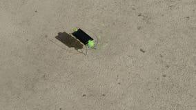 Vita dell'insetto della pila solare archivi video