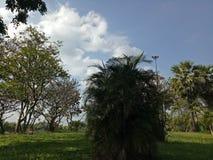 Vita dell'istantaneo della natura dell'albero del cielo Fotografia Stock