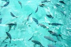 Vita dell'oceano sulle Maldive Fotografie Stock Libere da Diritti