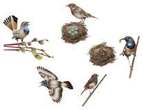 Vita dell'uccello Fotografia Stock Libera da Diritti