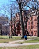 Vita della città universitaria di Harvard Immagine Stock Libera da Diritti