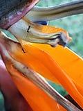 Vita della formica Fotografia Stock Libera da Diritti