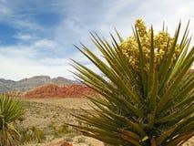 Vita della pianta al canyon rosso della roccia Fotografie Stock