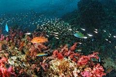 Vita della scogliera - mare di Andaman immagine stock libera da diritti