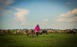 Vita delle Buffalo Immagini Stock