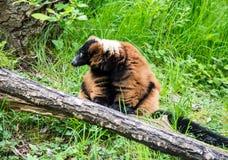 Vita dello zoo Immagine Stock