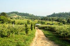 vita di agricoltura del paesaggio in rurale Fotografia Stock