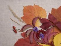 vita di autunno ancora fotografie stock