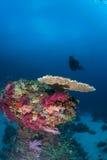 Vita di corallo Papuasia Nuova Guinea d'immersione Pacifico Ocea Fotografia Stock Libera da Diritti