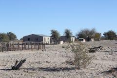 Vita di Kalahari Fotografia Stock Libera da Diritti