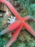 Vita di mare nella barriera corallina Fotografie Stock