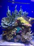 Vita di mare in NOLA Fotografie Stock