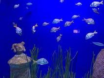 Vita di mare in NOLA Fotografia Stock