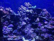 Vita di mare in NOLA Fotografie Stock Libere da Diritti