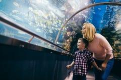 Vita di mare di sorveglianza del figlio e della madre in oceanarium immagine stock libera da diritti