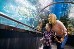 Vita di mare di sorveglianza del figlio e della madre in oceanarium fotografia stock libera da diritti