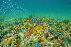 Vita di mare variopinta sul fondo dell'oceano Fotografia Stock Libera da Diritti