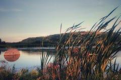 Vita di Reed nel lago rosa fotografie stock