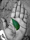 Vita di risparmio di risparmi della terra di risparmi dell'acqua di risparmi dell'albero immagine stock libera da diritti