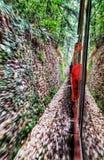Vita di Shimla di amore del treno del giocattolo fotografia stock