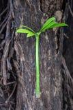 Vita di sostegno dell'albero nuova, pianta verde che cresce sull'albero immagine stock