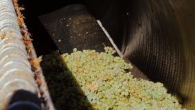 Vita druvor hälls in i pressen Därefter att pressa ut fruktsaften från druvorna för vitt vin lager videofilmer