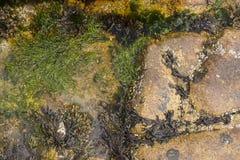 Vita e batteri di mare sulle rocce Fotografie Stock Libere da Diritti